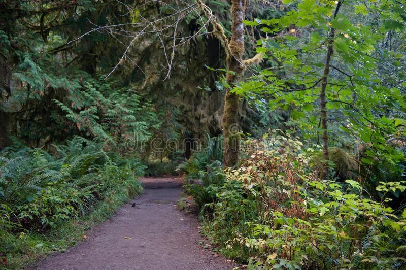Dirt Path Through West Coast Forest royalty free stock image
