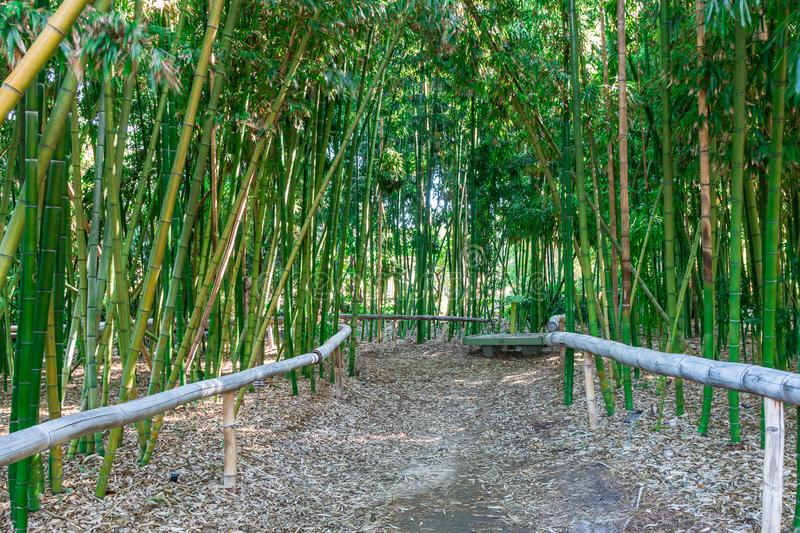 Dirt Path With A wooden Bench in Bamboo Forest stock photos
