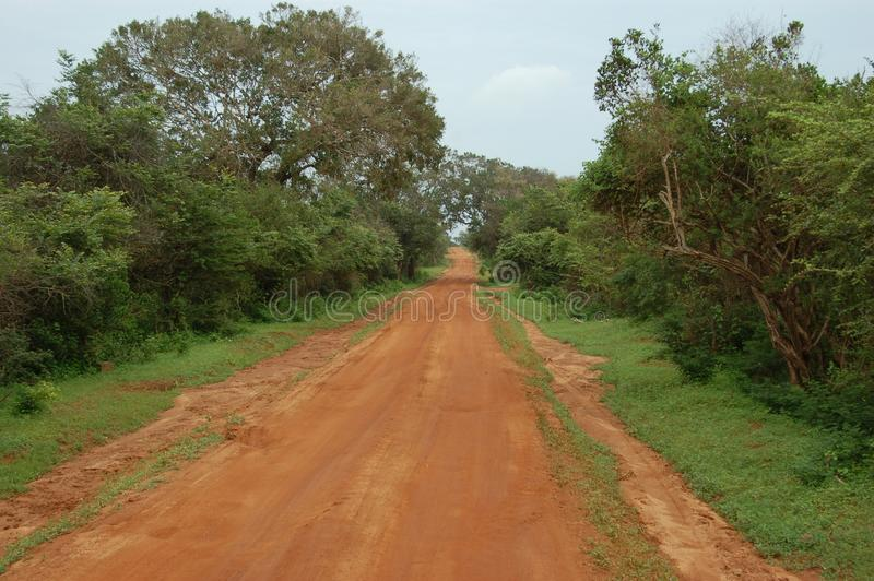 Dirt red road in the savannah. A view of a dirt red road in the savannah of Sri Lanka stock image
