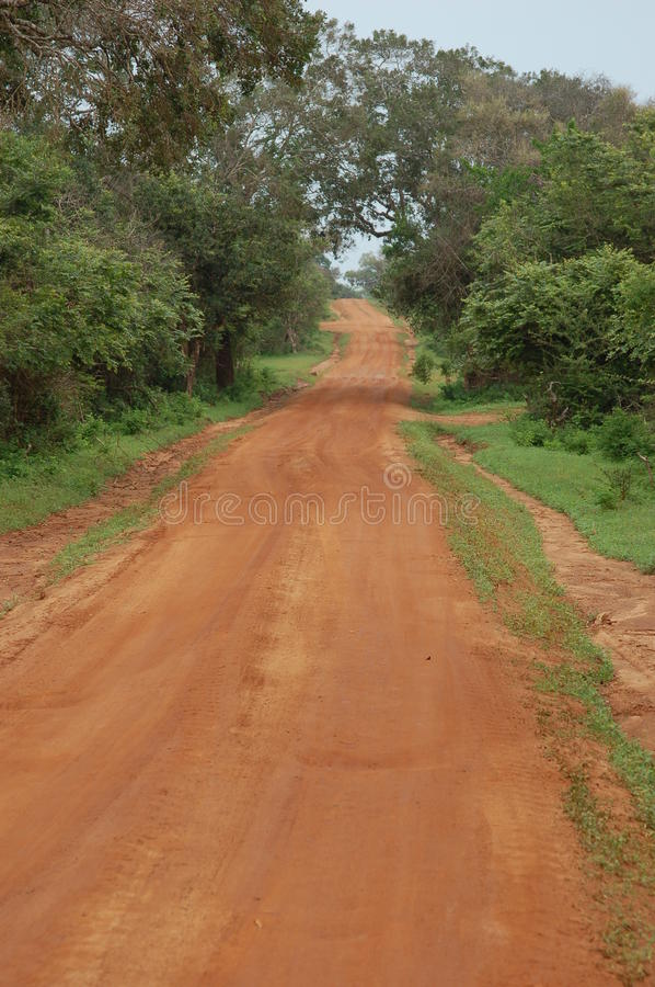 Dirt red road in the savannah. A view of a dirt red road in the savannah of Sri Lanka stock photo