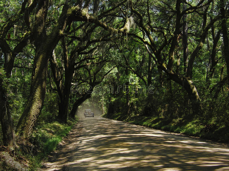 Download Dirt Road stock photo. Image of coastal, country, secret - 22932544