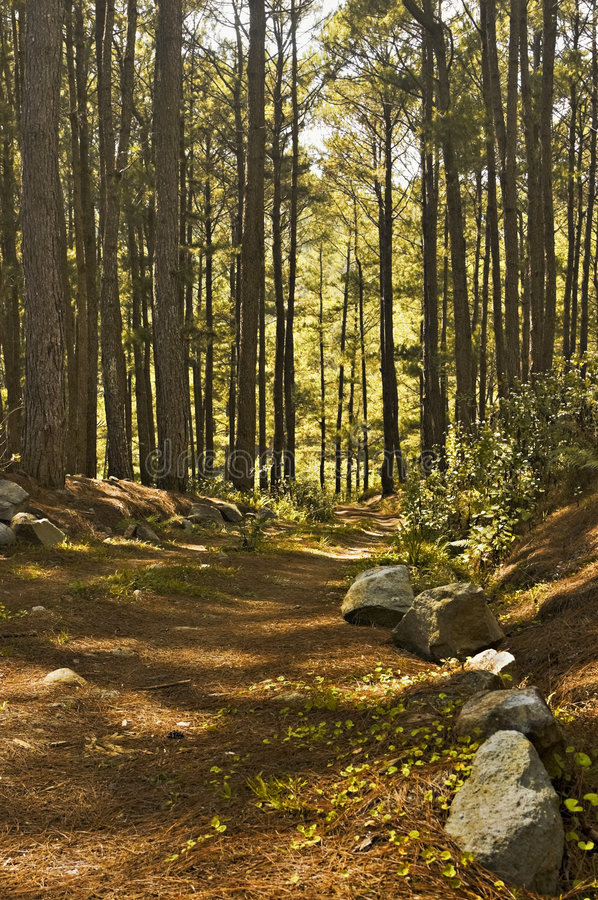 Free Dirt Road Royalty Free Stock Images - 5671039
