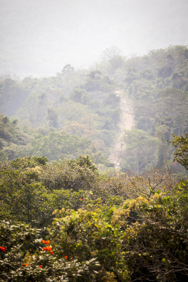 Dirt road through african jungle royalty free stock photo
