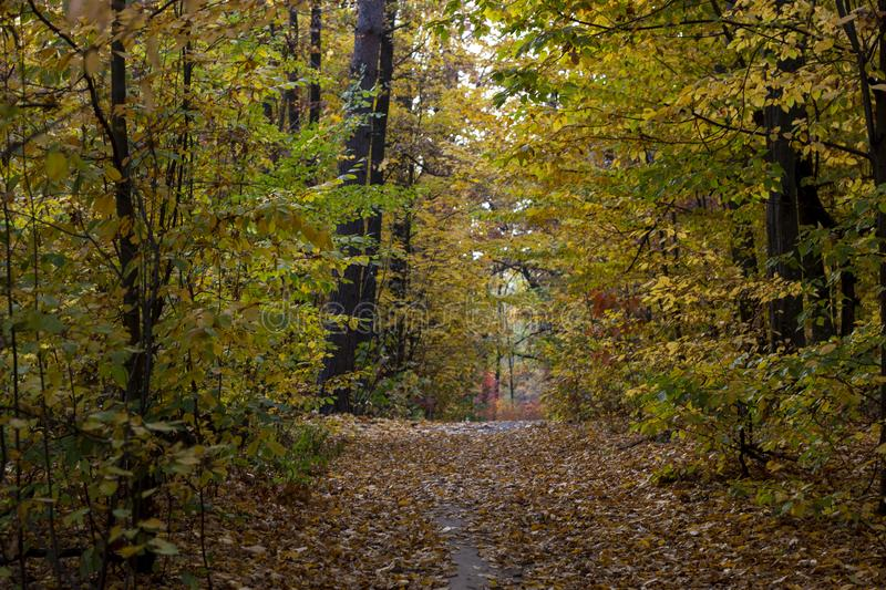 Dirt road in the autumn forest, yellow leaves in the trees and on the ground royalty free stock image