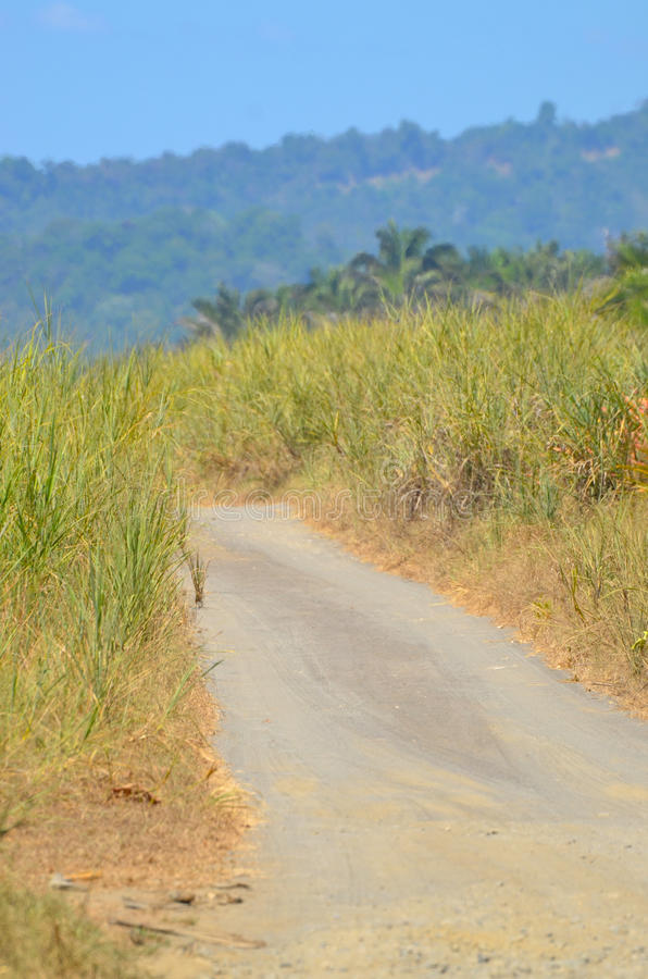 Dirt Road bordered with dune grass and aloe. A dirt road in Costa Rica Central America that is bordered with dune grass and aloe with mountains in the the stock photography