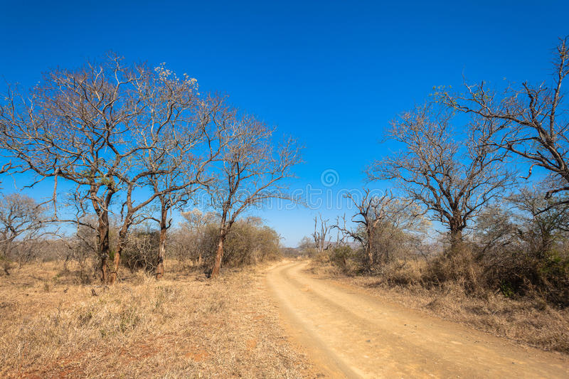 Dirt Road Dry Trees Terrain. Dry trees and grass along dirt road bring unique winter color terrain contrasts against the winter blue sky in Imfolozi park reserve stock photography