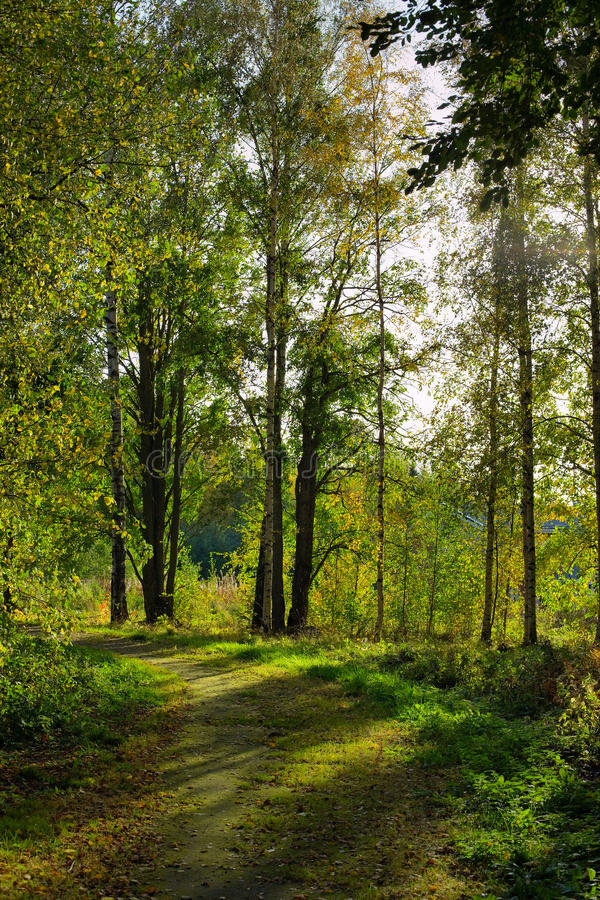 Dirt Road In Forest Royalty Free Stock Photos