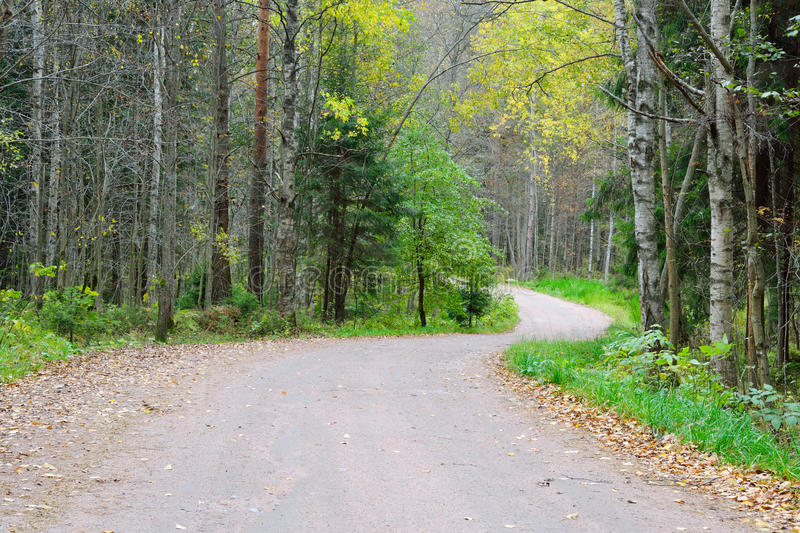 Dirt road in the forest. stock photos