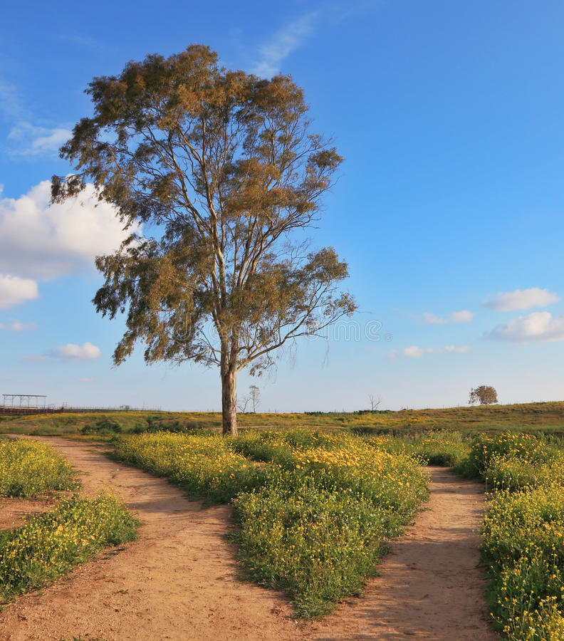 The dirt road forks around a lone tree royalty free stock photography
