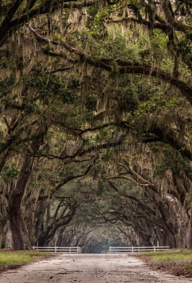 Dirt Road Through Gate Under Live Oak royalty free stock photography