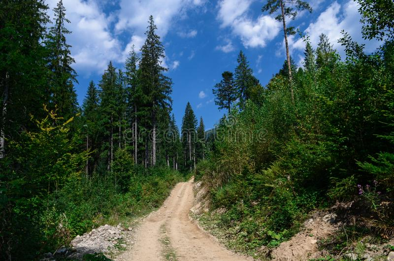 Dirt road high in the mountains among the tall pine trees against the blue sky royalty free stock images