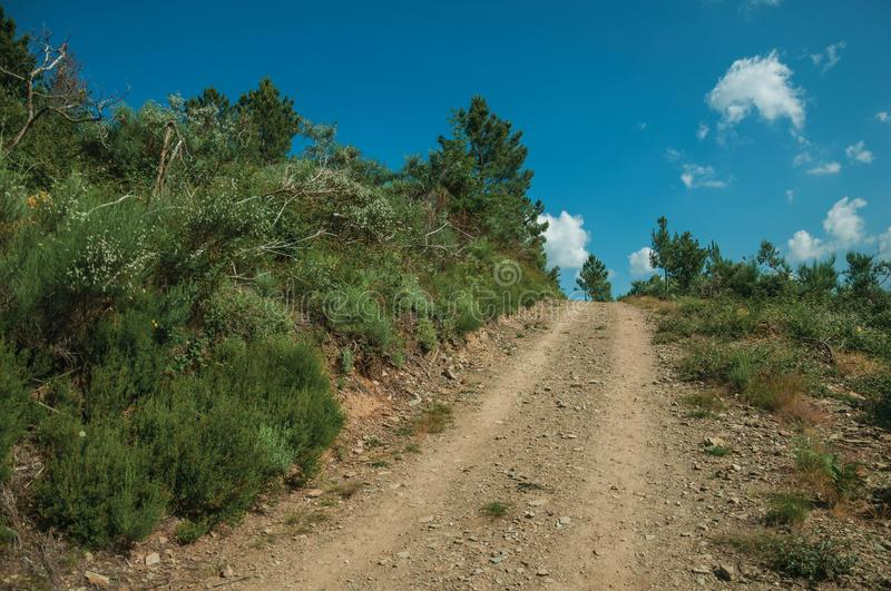 Dirt road on hilly terrain covered by bushes and trees royalty free stock images