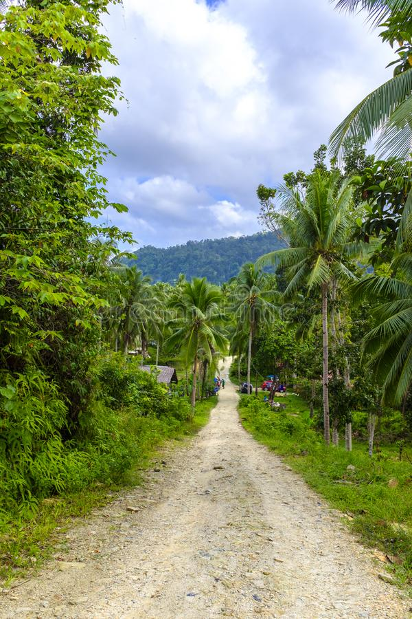Dirt road in a jungle royalty free stock photography
