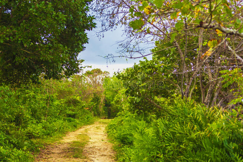 A dirt road in the jungle royalty free stock photography