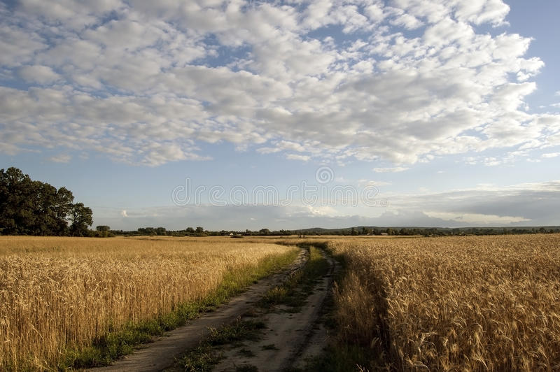 Dirt road. Leading through the fields royalty free stock photography