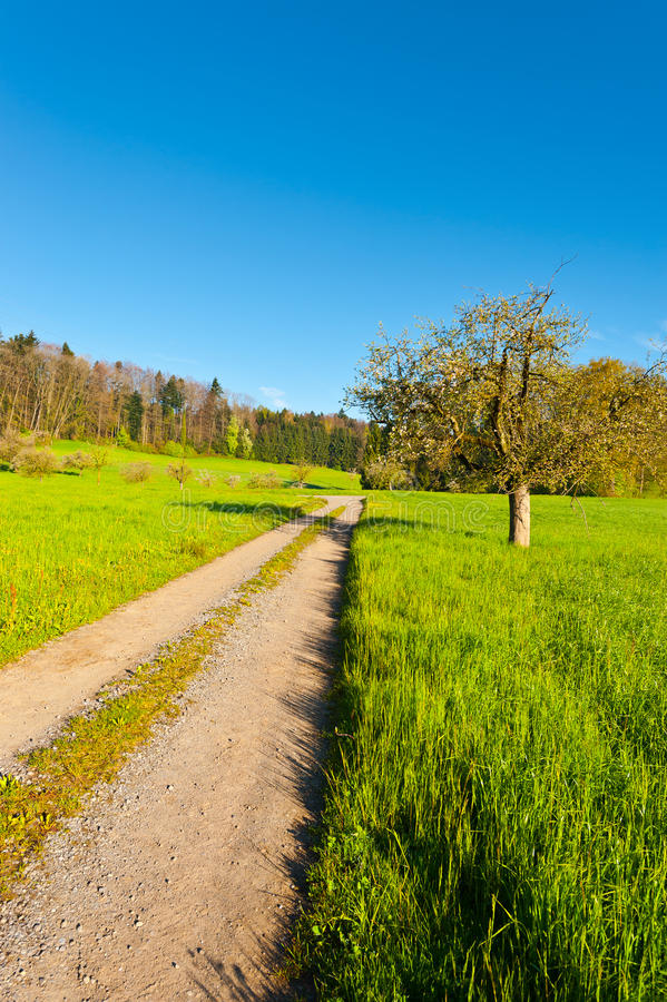 Dirt Road. Leading to the Farmhouse in the Swiss Alps royalty free stock image