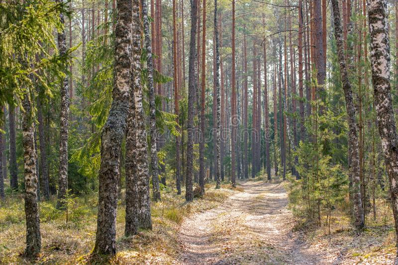 Dirt road in the mixed forest in early spring.  stock image