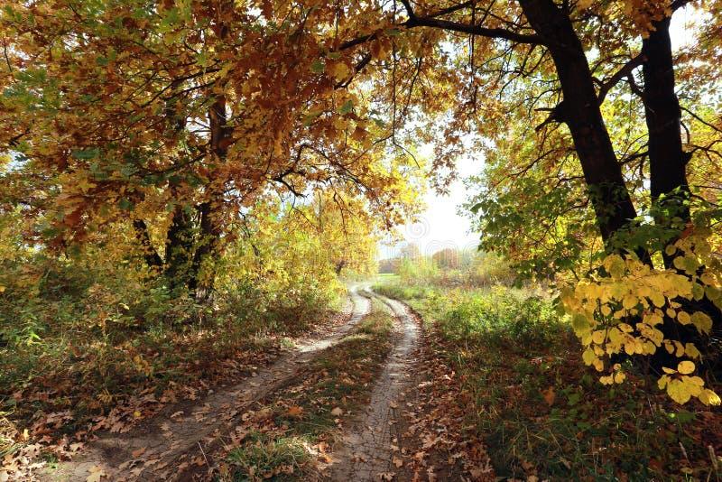 Dirt road in an oak grov stock image