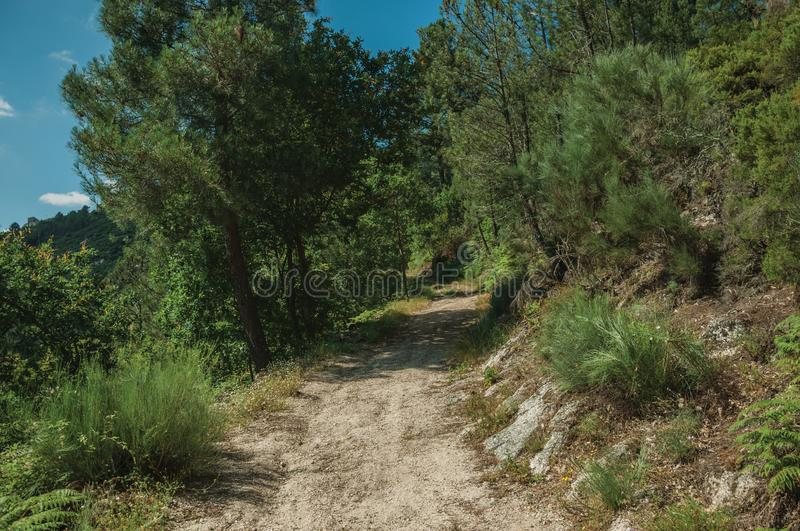 Dirt road over rocky terrain covered by trees royalty free stock photos