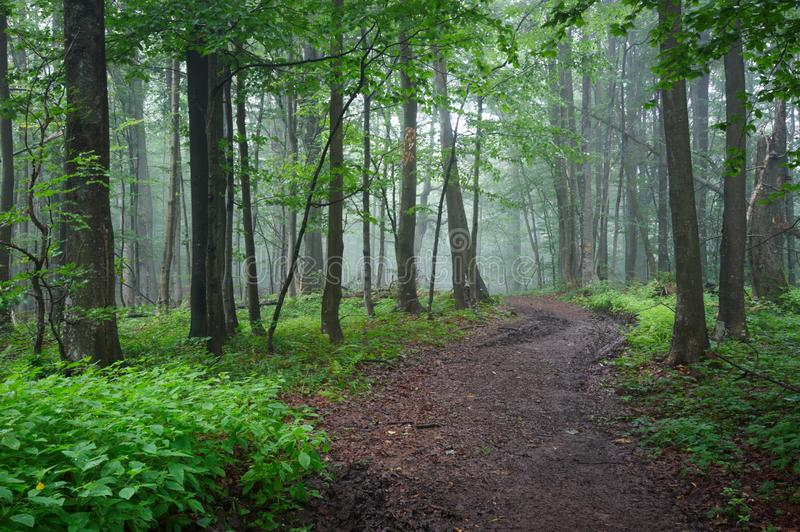 Dirt road path through the forest. In mountains royalty free stock photography