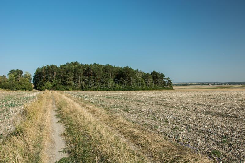 Dirt road and plowed field, coniferous forest on the horizon and cloudless sky. Dirt road and plowed field, coniferous forest on the horizon and blue cloudless stock photo