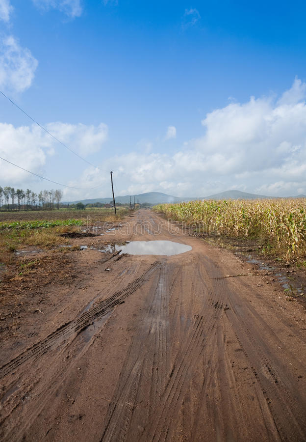 Download Dirt road after rain stock image. Image of corn, field - 15464709