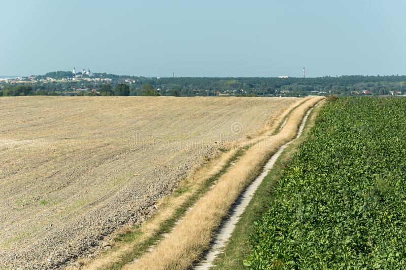 Dirt road separating the plowed field and beetroot field, the city of Chelm in Poland on the horizon. And blue cloudless sky royalty free stock photo