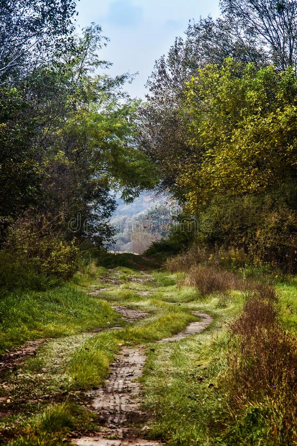 Dirt Road Surrounded Green Grasses By Trees At Daytime Free Public Domain Cc0 Image
