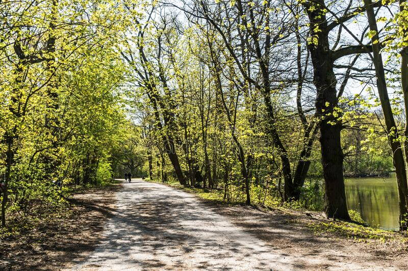 Dirt road surrounded with green trees at daytime. A dirt road surrounded with green trees at daytime stock photos