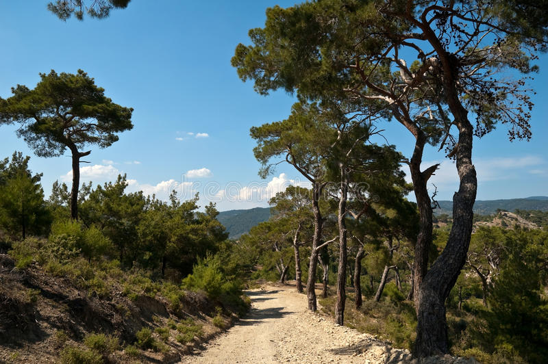 Dirt Road and Trees royalty free stock images