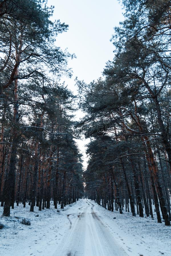 Dirt road in winter forest royalty free stock image