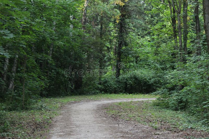 Dirt road through the woods. Rich in nature like a jungle royalty free stock image