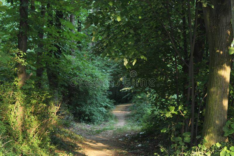 Dirt road through the woods. Rich in nature like a jungle royalty free stock photography