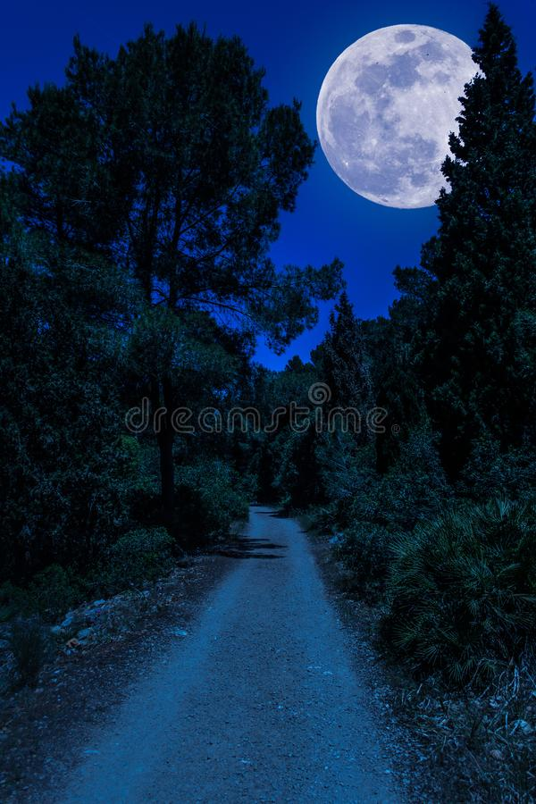 Dirt road in the woods with super moon stock images