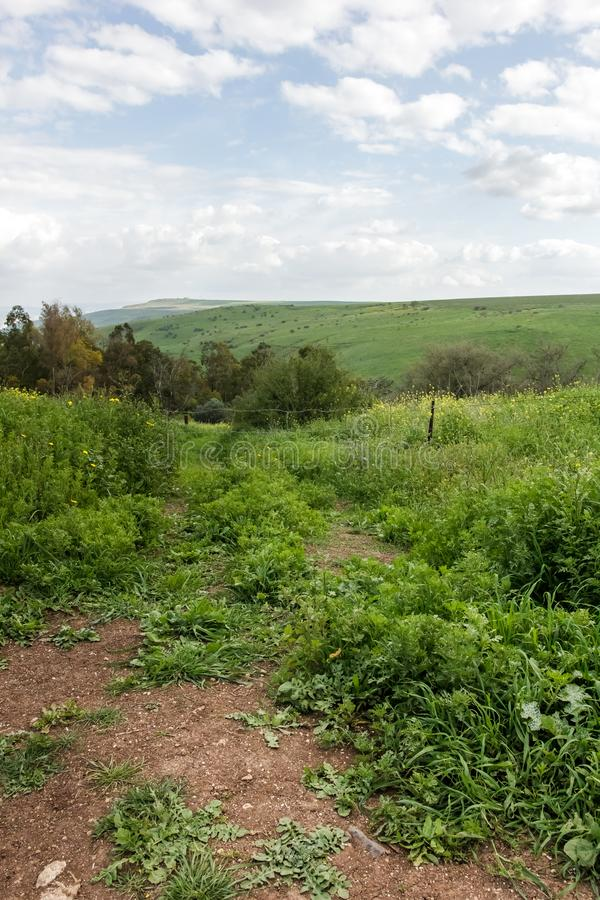 Dirt roads between mountains full of green grass. Trees and vegetation, hiking in Nahal Tavor, Israel royalty free stock images