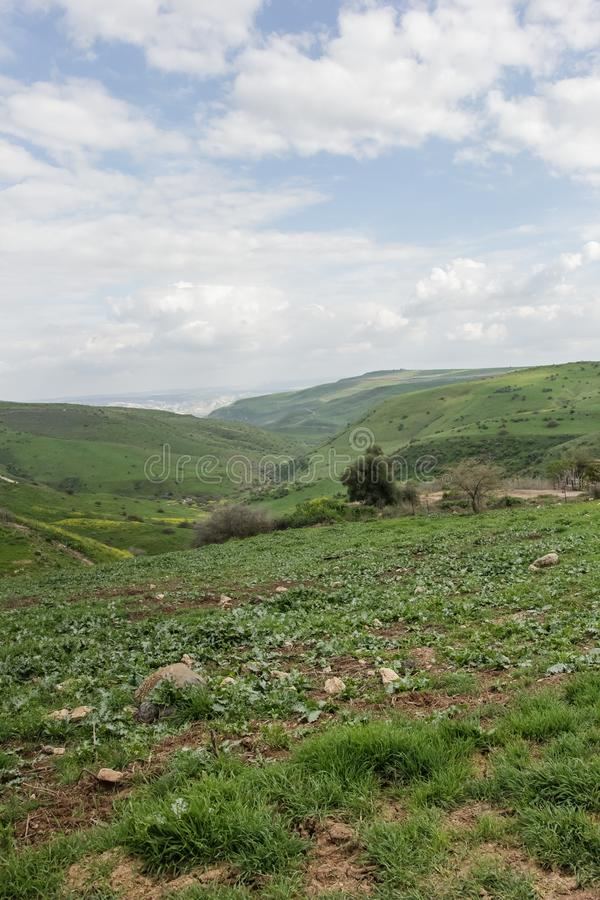 Dirt roads between mountains full of green grass. Trees and vegetation, hiking in Nahal Tavor, Israel royalty free stock photos