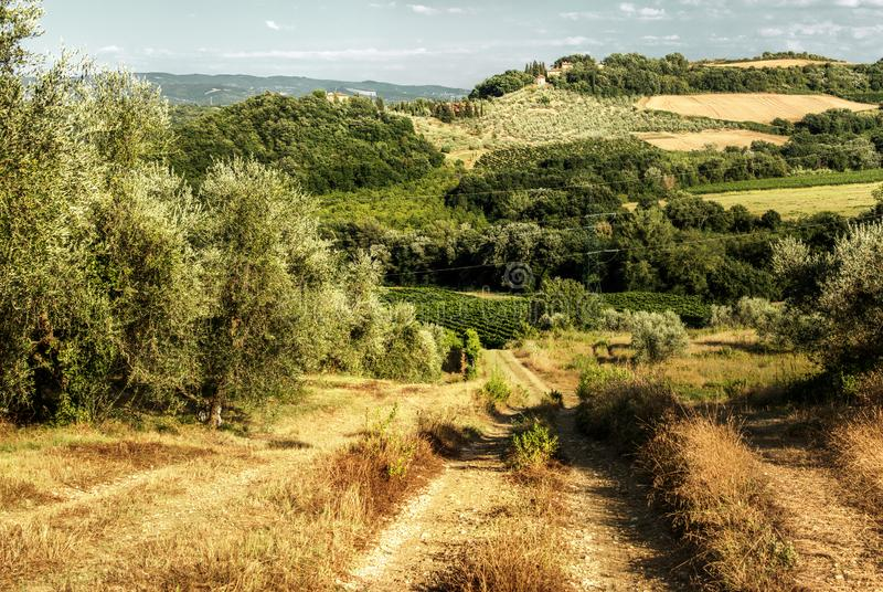 Dirt track in the Tuscan countryside. A meadow between olive groves shows the ruts of occasional farm vehicles lit in the sunrise stock photo