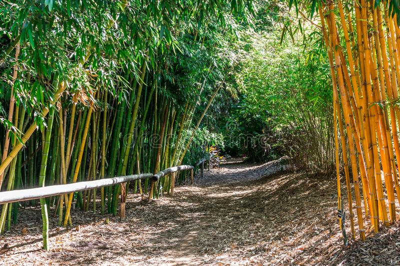 Dirt Trail in Bamboo Forest royalty free stock photo
