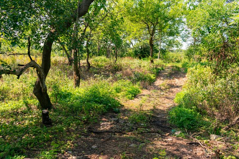 Dirt Covered Trail near the Quarries in Suburban Lemont Illinois. A dirt trail with trees and plants glowing in the sun near the quarries in the Chicago suburb stock photo