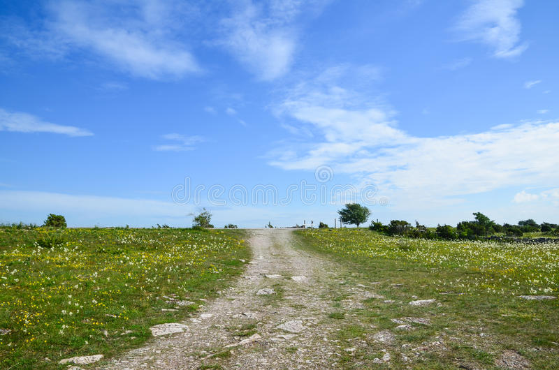 Dirtroad in summer meadow stock photography