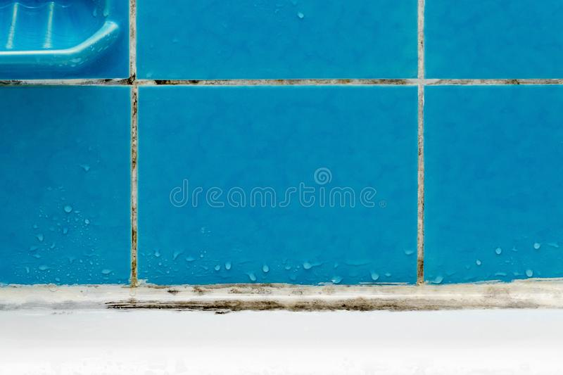 Dirty bathroom with mold and water drops on blue tile closeup stock images