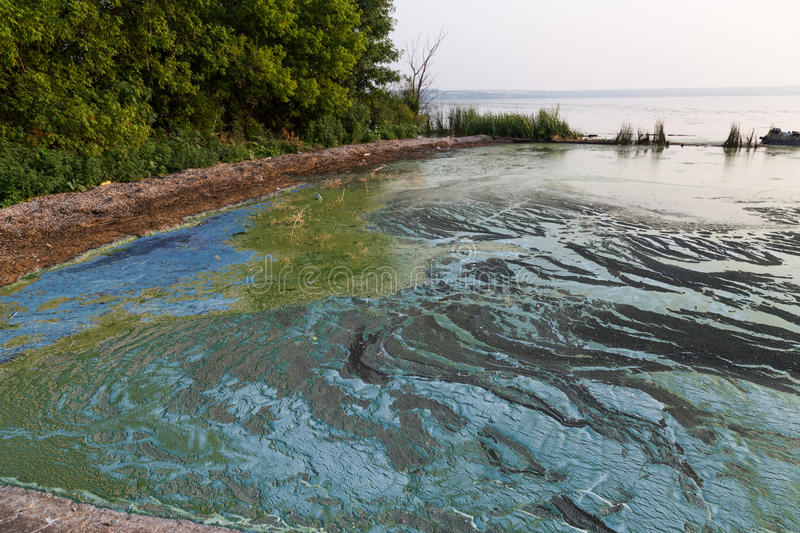 Dirty blue and green toxic algae reservoir. royalty free stock photo