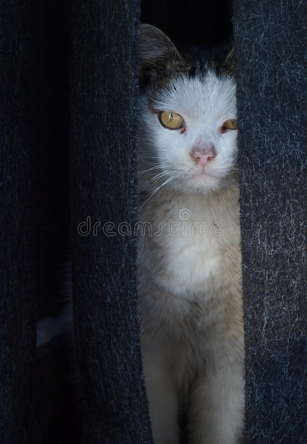 Dirty cat royalty free stock photos