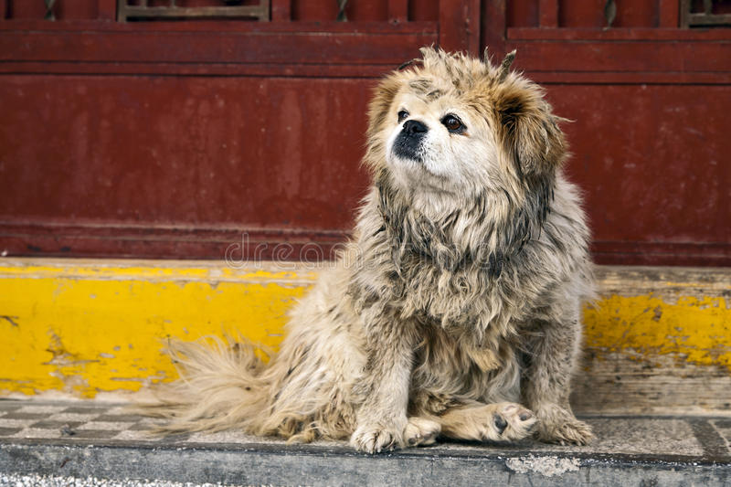 Download Dirty Dog In China Stock Photography - Image: 22358302