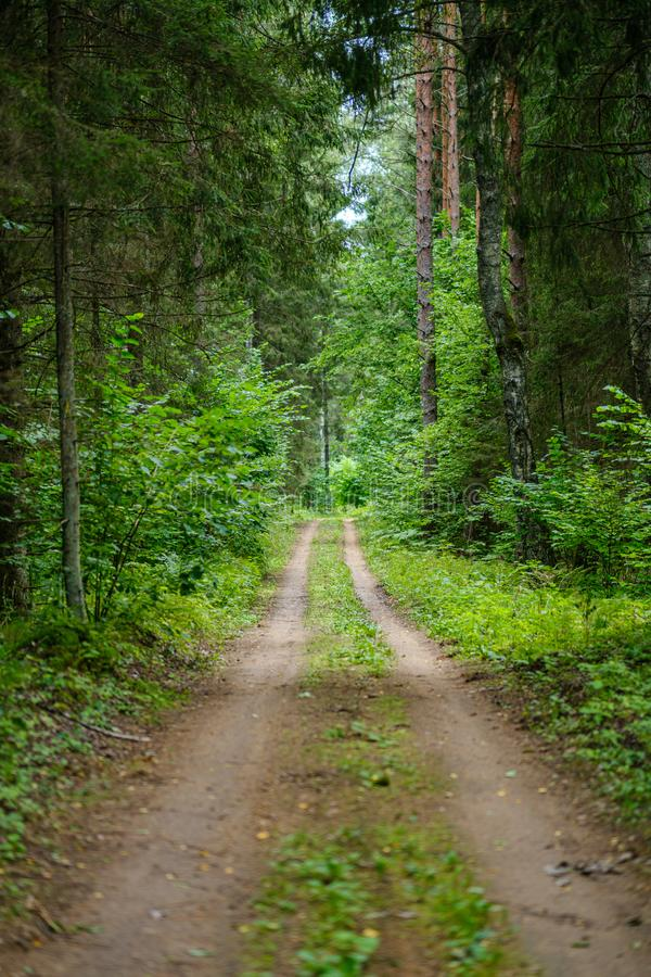 dirty gravel road in green forest with wet trees and sun rays royalty free stock photos