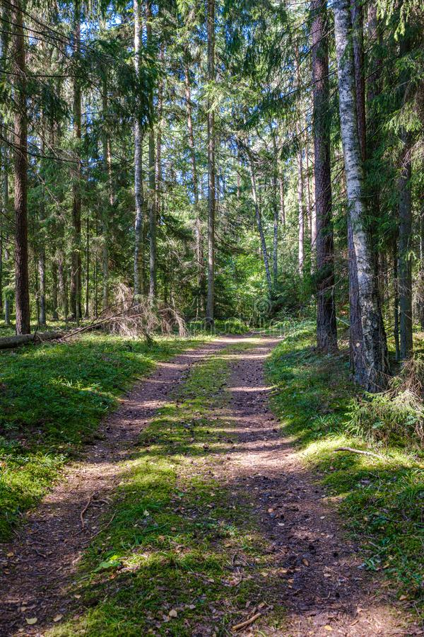 dirty gravel road in green forest with wet trees and sun rays royalty free stock photography