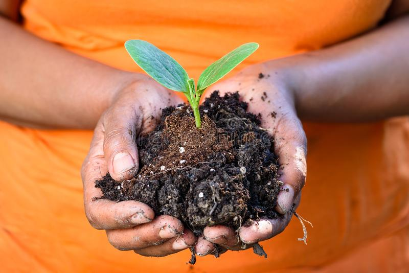 Hands holding soil and fresh young green plant together royalty free stock images