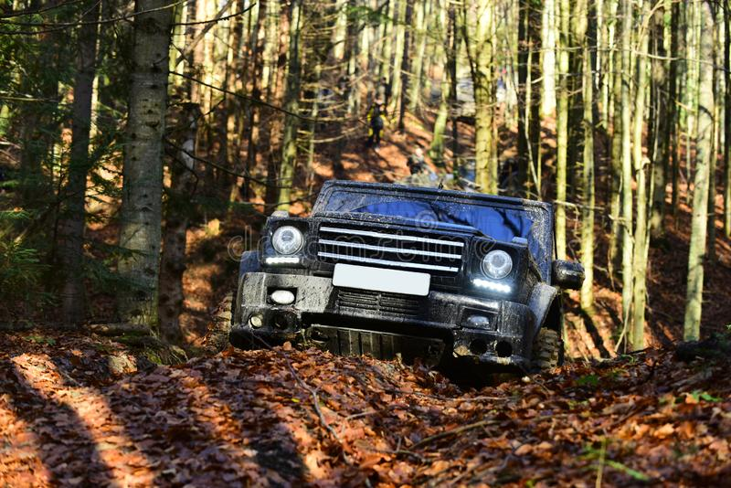 Dirty offroad car with fall forest on background, defocused. SUV with lights turned on path covered with leaves. Offroad race on sunny autumn day. 4x4 racing royalty free stock images