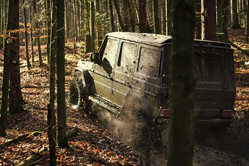 Dirty offroad car with fall forest on background. On sunny autumn day. SUV covered with mud on path covered with leaves. Crossover driving with cloud of smoke royalty free stock photo