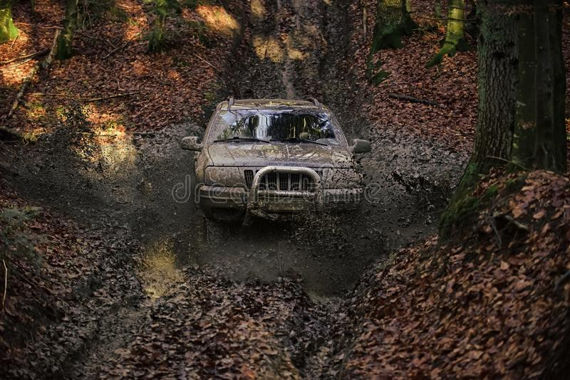 Dirty offroad car with fall forest on background. On sunny autumn day. SUV covered with mud stuck in dirt on path covered with leaves. Driving through puddle royalty free stock photo